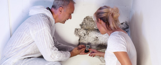 The Main Causes of Basement Mold and How to Get Rid of It