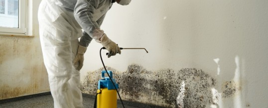 A Matter of Your Health: Black Mold and Other Ways a Leaky Basement Hurts Your Health