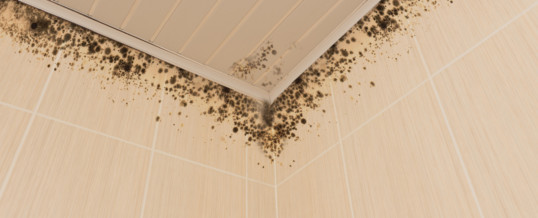 Waterproof Your Basement: 8 Potential Health Issues Caused by Mold