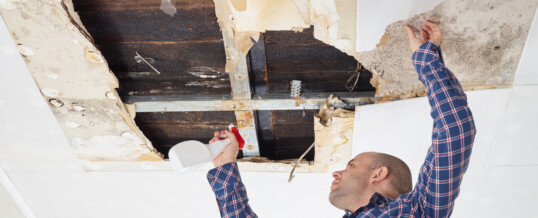 The Different Types of Mold Found in Basements